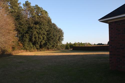 Ginkgo Hills yard